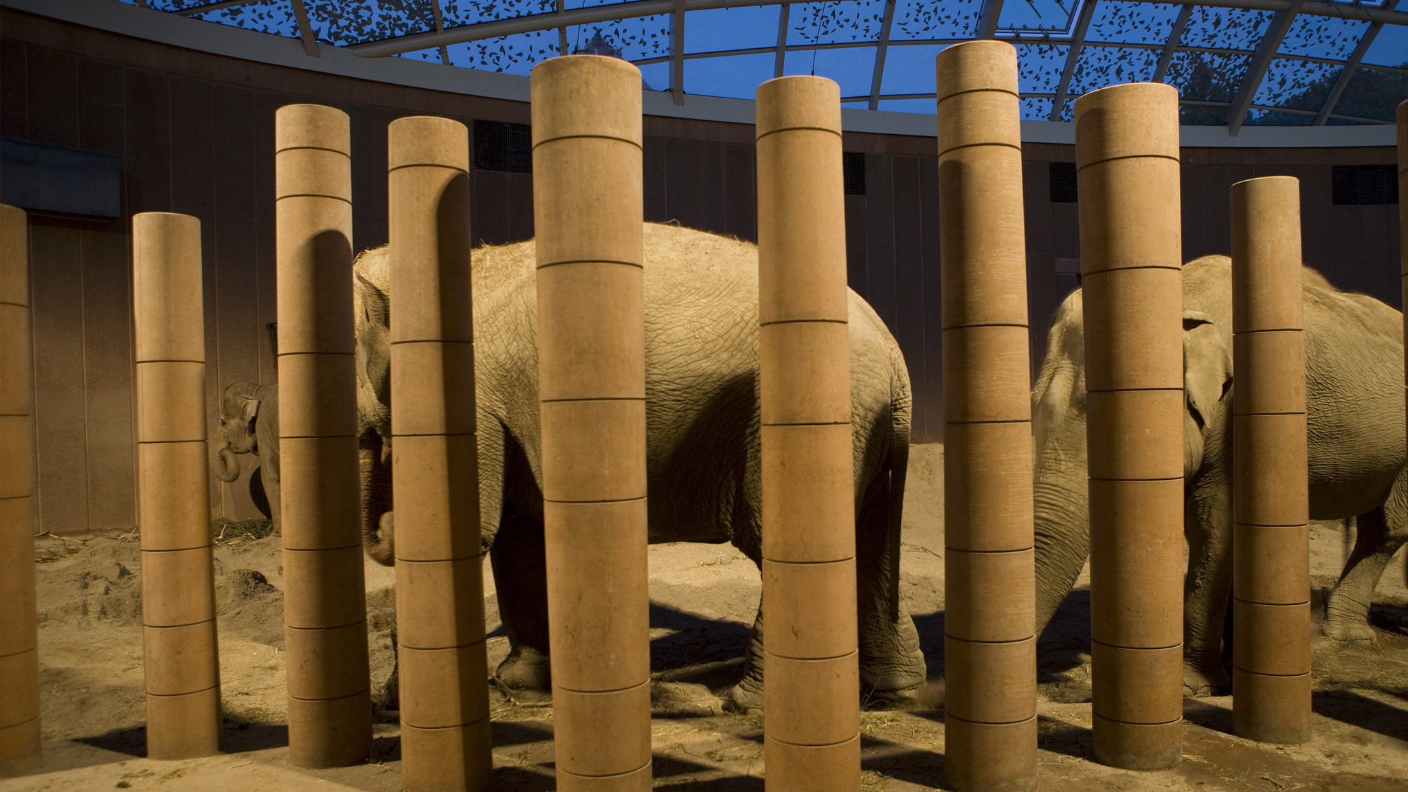 Lighting for Elephants house at Copenhagen Zoo