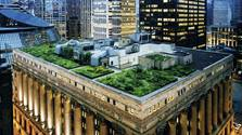 Chicago City Hall - green roof. This project was carried out by Atelier Dreiseitl, now member of the Ramboll Group