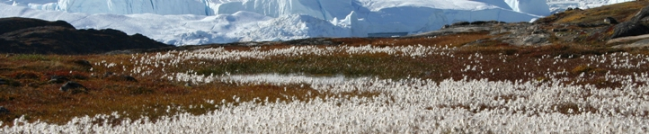 Environmental concerns for the Arctic environment require appropriate and timely consideration